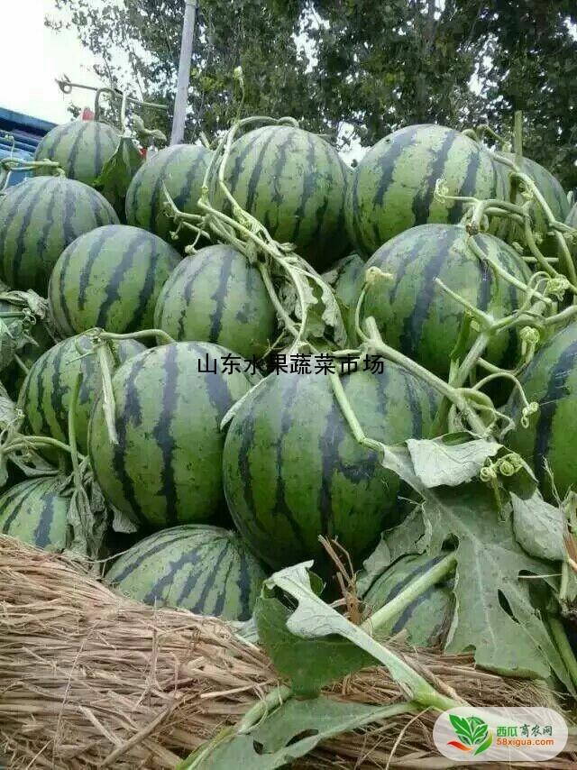 新疆铁西瓜图片