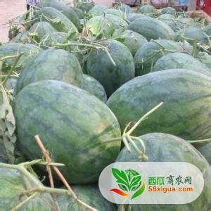 西瓜供应 黑皮无籽  二,详细说明:    河南省 太康县 常营镇   西瓜