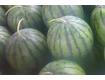 河北邢台西瓜大量出售西瓜