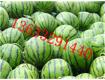 河北邢台西瓜批发13633291440 量大更优惠,保甜保熟