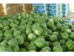 安徽亳州西瓜果蔬大量供应批发采购