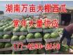 湖南 8424 麒麟瓜 大量供应