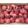 山东红富士苹果产地批发多少钱一斤