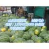山东东明西瓜大量上市(最近几天开园)--微信短视频看货