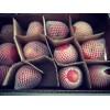 陕西洛川红富士苹果销售价格