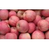 安徽砀山红富士苹果产地批发价格,美八,嘎拉