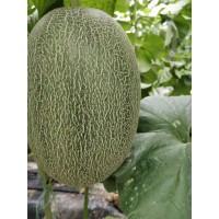 山东济南甜瓜代办西瓜代办各种品种