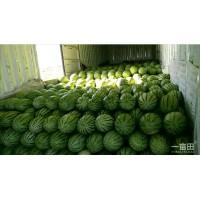 2020新疆安农金城西瓜 肉美色正 价格公道 对接全国市场