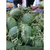 河南开封西瓜上市时间、今日市场批发多钱一斤