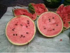 早春红玉西瓜,2k西瓜,每3月份上市,合作的老板提前预订!